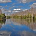 47- Everglades Serenity by Joseph Keane