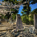 47 Samurai And Cherry Blossoms by Ross Henton