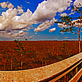 4x1 Everglades Panorama Number Two by Rolf Bertram
