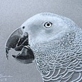 African Grey Parrot by Pio De Lima