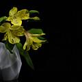 Alstroemeria Flower by Stela Knezevic