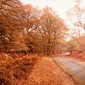 Autumn by Svetlana Sewell