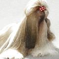 Beautiful Dog by Anna J Davis