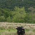 Beautiful Scotland To Fall In Love by Valia Bradshaw