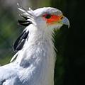 Bird by Hristo Shanov