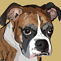 Boxer Dog Portrait by Robyn Saunders