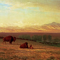 Buffalo On The Plains by Albert Bierstadt