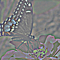 Butterfly Collection by Debra     Vatalaro