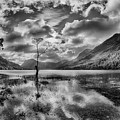 Buttermere Tree by Graham Moore