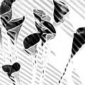 Calla Lilies by Gary at TopPhotosI