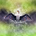Cormorant Dries Its Wings by Humorous Quotes