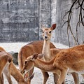 Deer by FL collection