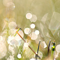 Dew In Grasses by Jana Behr