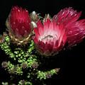 Exotic Flower by Elvira Ladocki