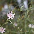 Flower by Naga Ikkurthi