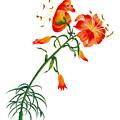 Flowers by Jing Yang