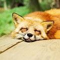 Fox by FL collection