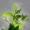 Fresh Growth Of Healthy Green Leafs  by Humourous Quotes