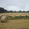 Hay Bales by Martin Newman