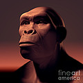 Homo Habilis by Science Picture Co
