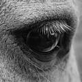 Horse Eye by Larah McElroy