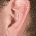 Human Ear by Ted Kinsman