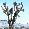 Joshua Tree by Gravityx9  Designs