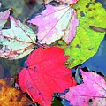 Leaf by Mery Moon