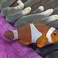 Malaysia, Marine Life by Dave Fleetham - Printscapes