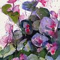 My Annual Begonias by Kris Parins