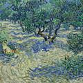 Olive Orchard by Vincent van Gogh