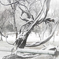 Park During Heavy Snowfall  by Vladi Alon