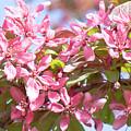 Pink Cherry Flowers by Irina Afonskaya