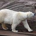 Polar Bear by FL collection
