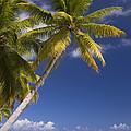 Polynesian Beach With Palms by Jean-Louis Klein & Marie-Luce Hubert