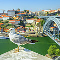Porto Skyline Seagull by Benny Marty