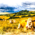 Resting Cows Art by David Pyatt