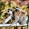 Ring Tailed Lemur With Baby by George Atsametakis