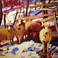 5 Sheep by Brian Simons