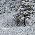 Snowstorm In The Pike National Forest by Steve Krull