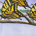 5 Swallowtails by Catherine G McElroy