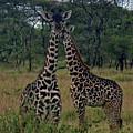 Tanzania by Paul James Bannerman