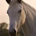 The Horse Portrait by Angel Ciesniarska