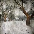 The Winter Time by Angel  Tarantella