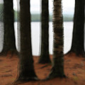 5 Trees by John Meader