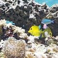 Tropical Fish by Michael Shake