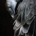 Vulture by FL collection