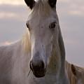 White Horse by Angel Ciesniarska