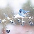 Winter Birds by Jill Wellington