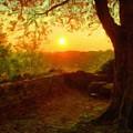 Nature In by Malinda Spaulding